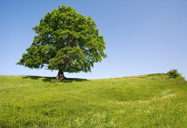 Welche Einkünfte aus Land- und Forstwirtschaft können steuerlich auf drei Jahre verteilt werden?-